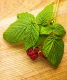 Raspberry fruit with stem and leaves Royalty Free Stock Photo