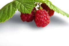 Raspberry fruit with stem and leaves Royalty Free Stock Photos