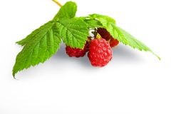 Raspberry fruit with stem and leaves Stock Images