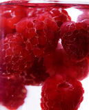 Raspberry fruit Royalty Free Stock Photography