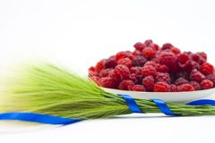 Raspberry fruit on white background Stock Image