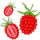 Raspberry fruits Stock Photography
