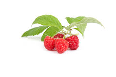 Raspberry fruits under green leaf, white background, Stock Photo