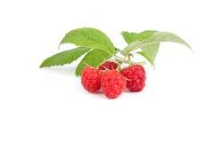 Raspberry fruits under green leaf, white background,. Four raspberry fruits under green leaf, white background Stock Photo
