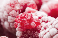 Raspberry fruity Stock Images