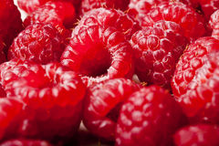 Raspberry goodness Royalty Free Stock Images