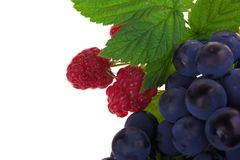 Raspberry and grapes fruit Royalty Free Stock Photography