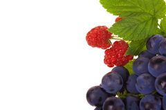 Raspberry and grapes fruit Stock Photo