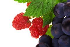 Raspberry and grapes fruit Stock Photos