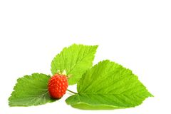 Raspberry and green Royalty Free Stock Photo