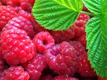 Raspberry and green leaf Stock Image