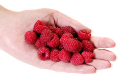 Raspberry in hand. Raspberry in woman hand isolated on white Royalty Free Stock Photography