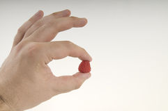 Raspberry in hand Royalty Free Stock Photos