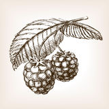 Raspberry hand drawn sketch style vector Stock Photo