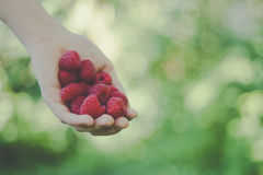 Raspberry hand Royalty Free Stock Photography