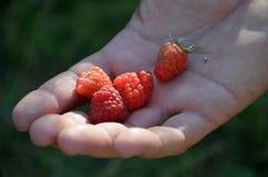 Raspberry on hand Stock Photos