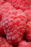 Raspberry in a heap Stock Photography