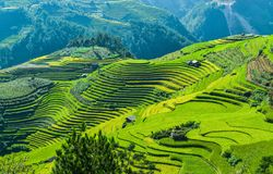 Raspberry hill and Terraced rice field of the H`Mong ethnic people. The H`Mong`s traditional house and their terraced rice field which is called `Raspberry hill stock images