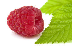 Raspberry isolated Royalty Free Stock Photos