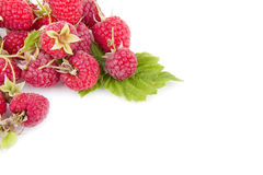 Raspberry isolated Royalty Free Stock Photography
