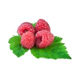 Raspberry isolated on white. Fresh raspberry isolated on white background Royalty Free Stock Images