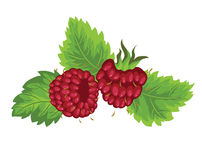 Raspberry. Isolated on white background Royalty Free Stock Images