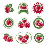 Raspberry labels and elements set. Vector Stock Image