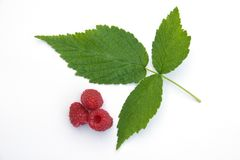 Raspberry- leaf and berries Stock Images