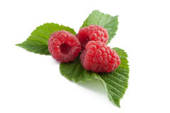 Raspberry with leaves. Isolated on white Royalty Free Stock Photography