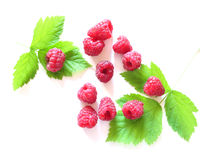 Raspberry and leaves Royalty Free Stock Photos