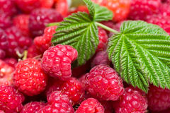 Raspberry with leaves Stock Photography