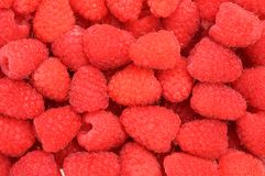 Raspberry. A lot of raspberry for background use Stock Image