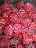 Raspberry, a lot of raspberries, stock image