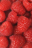 Raspberry macro. Close up image of fresh raspberries Royalty Free Stock Photo