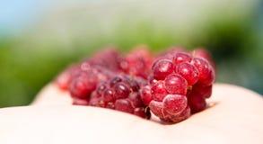Raspberry macro on a palm Royalty Free Stock Photos