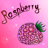 Raspberry.the magenta background of schematically drawn. The magenta background of schematically drawn raspberries Royalty Free Stock Photography