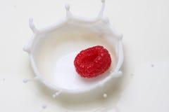 Raspberry and milk. Fresh raspberry splashing into milk Royalty Free Stock Photography