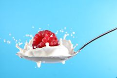 Raspberry milk or yogurt splash Royalty Free Stock Photography