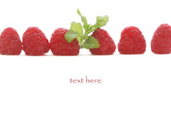 Raspberry mint. Raspberry with mint close up Stock Images