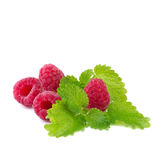 Raspberry with mint leaf Royalty Free Stock Photos