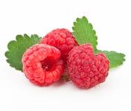 Free Raspberry On A White Background Royalty Free Stock Photos - 17364418