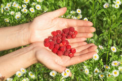 Raspberry On Heart Shape On Woman Hand Royalty Free Stock Images