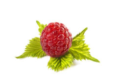 Free Raspberry On Leaf Royalty Free Stock Photography - 9867857
