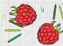 Raspberry painted on papper illustration Stock Image