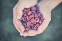 Raspberry in palm Royalty Free Stock Photo