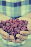 Raspberry in palm Royalty Free Stock Photography