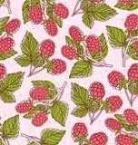Raspberry pattern Stock Image