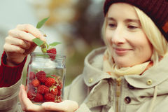 Raspberry picking Stock Photography