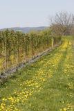 Raspberry plantation Royalty Free Stock Image