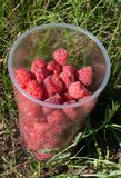 Raspberry in plastic glass Royalty Free Stock Images